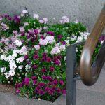 Blomster TORGALLMENNINGEN